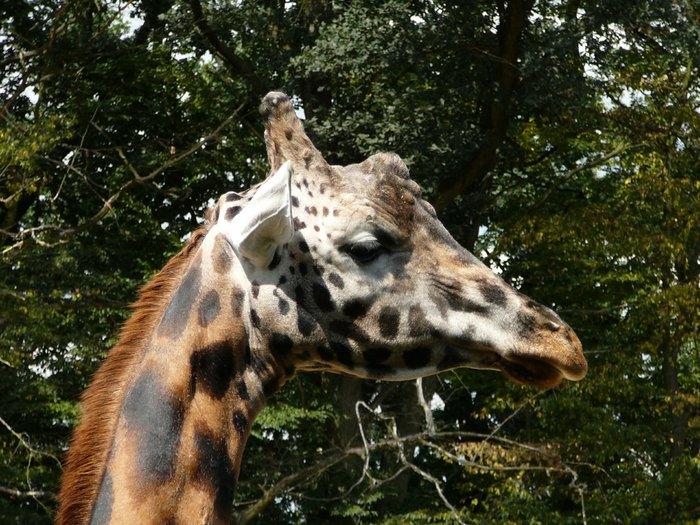 Žirafa Zoo Zlín